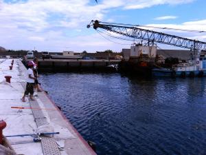 羅臼港で釣り1
