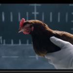 ベンツとジャガー両方のCMにニワトリがなぜ?【動画】 - Jaguar_vs_Chicken_02