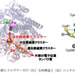 FCVの低コスト化に光!白金に代わる触媒研究で成果 - Hyougo