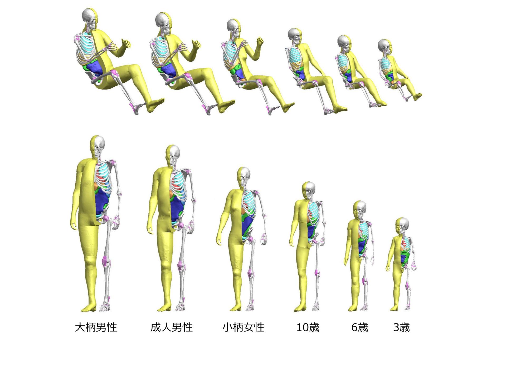 トヨタがバーチャル人体モデル thumsに 子ども モデルを追加 記事