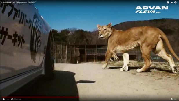 Zoo_Drift01