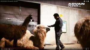 Zoo_Drift03