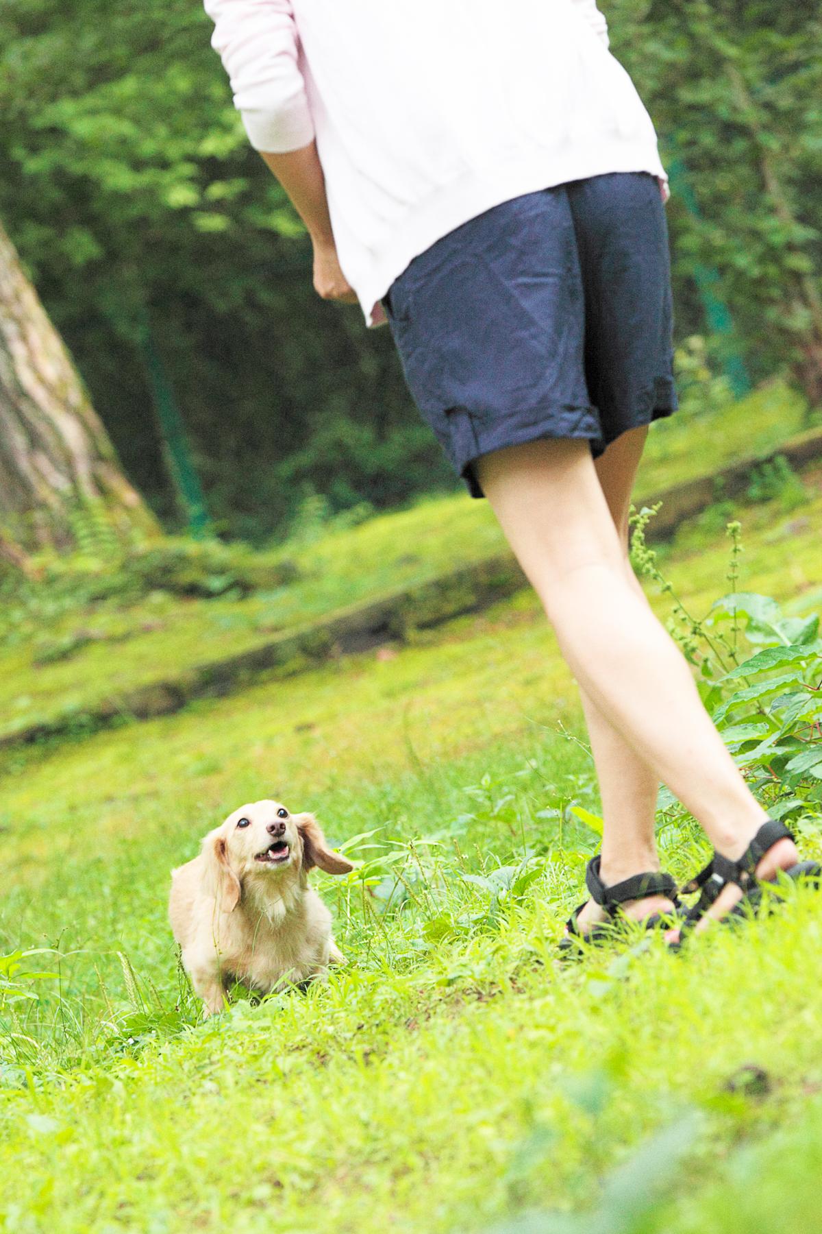 「愛犬とプジョー308 Allure BlueHDiで楽しむ妄想ドライブデート【後編】 PR」の17枚目の画像