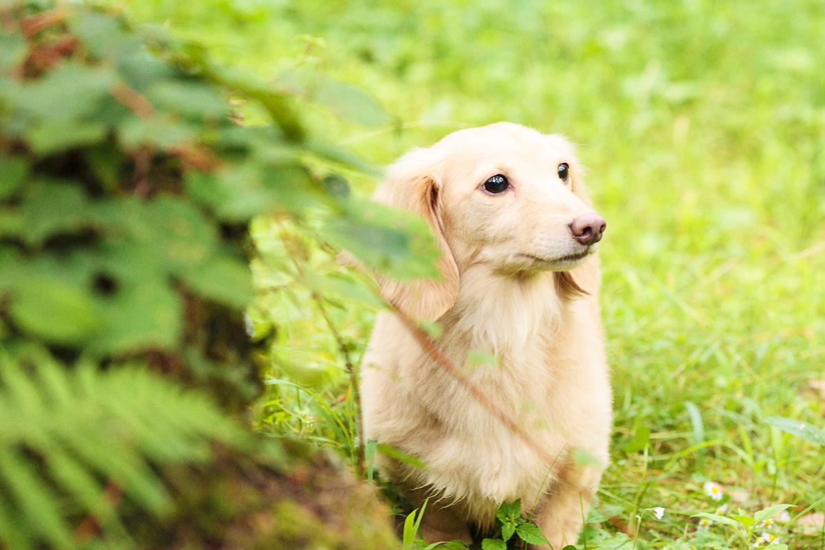 「愛犬とプジョー308 Allure BlueHDiで楽しむ妄想ドライブデート【後編】 PR」の18枚目の画像