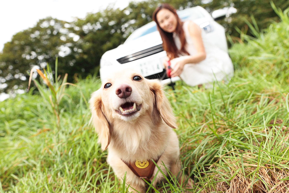 「愛犬とプジョー308 Allure BlueHDiで楽しむ妄想ドライブデート【後編】 PR」の1枚目の画像