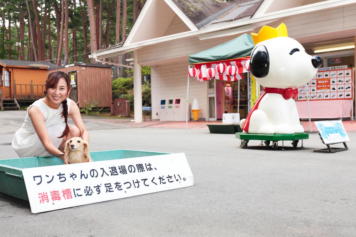 「愛犬とプジョー308 Allure BlueHDiで楽しむ妄想ドライブデート【後編】 PR」の10枚目の画像
