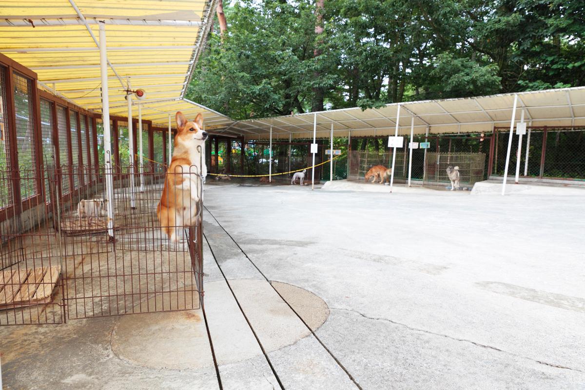 「愛犬とプジョー308 Allure BlueHDiで楽しむ妄想ドライブデート【後編】 PR」の9枚目の画像