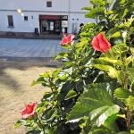 冬でもハイビスカスが咲く天草ドライブコースその2・上天草(熊本)【車中泊女子の全国縦断記】 -