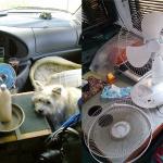 キャンピングカーの防寒/防暑対策:キャンピングカー生活の日常・その9【車中泊女子の全国縦断記】 -