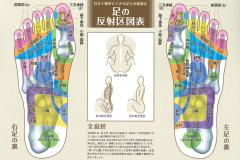 足の反射区1