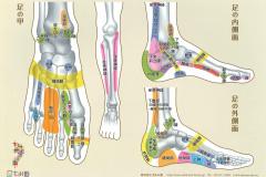 足の反射区2