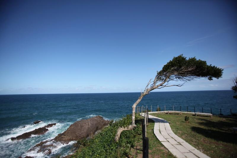 日本海からの崖を駆け上がる風に長年吹き付けられ斜めに伸びながらも地に根差す樹木