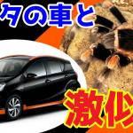 あっ、このトヨタ車は●●虫!リアルに500匹の昆虫と暮らすYouTuberが昆虫に似ているクルマをご紹介!【動画】 - サムネイル 昆虫っぽいトヨタの車ランキング
