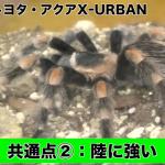 あっ、このトヨタ車は●●虫!リアルに500匹の昆虫と暮らすYouTuberが昆虫に似ているクルマをご紹介!【動画】 - スクリーンショット (524)