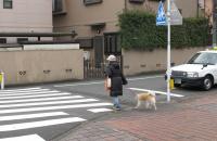 「覚えていますか「横断歩道は歩行者優先」。無視して通過すると大事故や罰則も! 」の11枚目の画像ギャラリーへのリンク