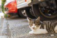 「猫バンバン」って何? 寒い朝晩は特にやりたいエンジンルームに入った尊い命を救う方法 - NEKO_BANBAN001