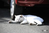 「猫バンバン」って何? 寒い朝晩は特にやりたいエンジンルームに入った尊い命を救う方法 - NEKO_BANBAN004