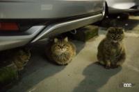 「猫バンバン」って何? 寒い朝晩は特にやりたいエンジンルームに入った尊い命を救う方法 - NEKO_BANBAN009
