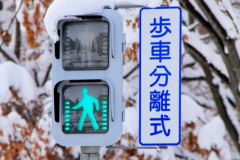 歩車分離式信号機歩行者